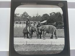 A DAY IN LONDON ELEPHANTS INDIA INDIAN PEOPLE Photo Plaque De Verre  GLASS SLIDE  CIRCA EARLY 1900S - Diapositivas De Vidrio
