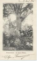 Bonsecours - Le Gros Chêne - 1901 - Péruwelz