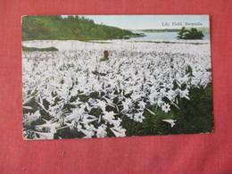 Lily Field  Bermuda  Has Stamp & Cancel    Ref 3157 - Bermuda