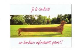Cpm Humour Chien Teckel - Bonheur - Concept De Rijk Pr. - Dogs