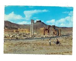 SYRIA - PALMYRA, Great Colonnade - Syrien