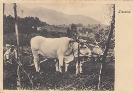 """SCENA CONTADINA /  """" L'aratro """" _ Viaggiata 1941 - Trattori"""
