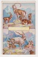26835 Chromo CHOCOLAT DEBAUVE GALLAIS Hugon Saint Peres Paris - Chevre Antilope Coudou Bouquetin - Chocolat