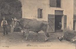 MAULE: Intérieur De Ferme - Attelage De Boeufs - Maule