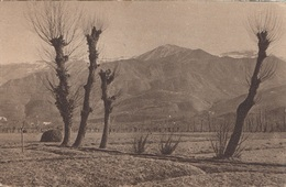 Paesaggio Con Alberi Covoni Di Fieno E Montagne (Ballerini & Fratini) - Cartoline