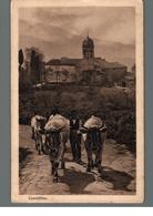 Cpa Italie Casentino Attelage Boeufs  Déstockage à Saisir - Italia