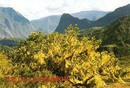 La Réunion : Cirque De Cilaos - La Réunion