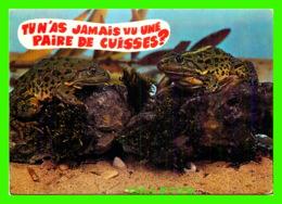 GRENOUILLES - TU N'AS JAMAIS VU UNE PAIRE DE CUISSES ? - CIRCULÉE EN 1977 - COMBIER MACON - CIM - - Animaux & Faune