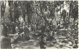 CPSM DE SAÏDIA  (MAROC)  LE MARCHE - Maroc