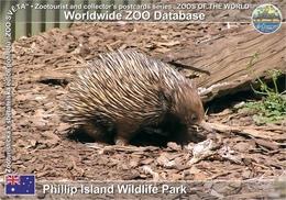 744 Phillip Island Wildlife Park, AU - Short-beaked Echidna (Tachyglossus Aculeatus) - Australia