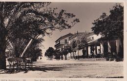 IBIZA  San Antonio Abad  Paseo De Las Palmeras - Ibiza