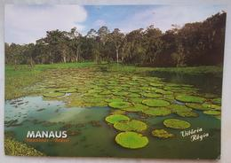 MANAUS - Amazonas - VITORIA REGIA - Brasil Turistico  Vg - Manaus