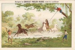 Chromo  CHOCOLAT  POULAIN  /  LA  PÊCHE  DES  GYMNOTES - Poulain