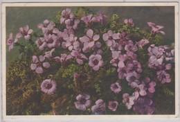 Saxifraga Oppositifolia - Thor E Gyger - Fiori