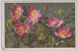 Rosa Alpina - Thor E Gyger - Fiori