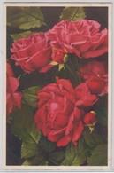 Pauls Scarlet Rose - Thor E Gyger - Fiori