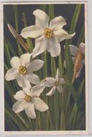 Narcissus Poeticus - Thor E Gyger - Fiori