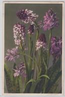 Orchis Ustulata - Thor E Gyger - Fiori