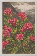 Rhododendron Ferrugineum - Stfz N.255 - Fiori