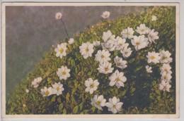 Dryas Octopetela - Stfz N.270 - Fiori