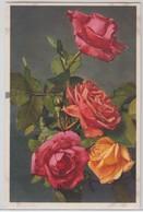 Roses - Stfz N.377 - Fiori