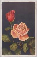 Roses - Stfz N.375 - Fiori