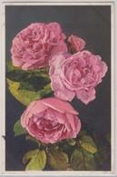 Roses - Stfz N.376 - Fiori