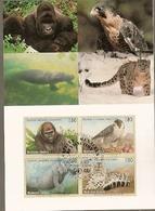 United Nations & Maxi, Vereinte Nationen, Endangered Species, Fauna, Animals, UNO Geneve 1993 (142) - Genf - Büro Der Vereinten Nationen