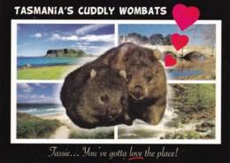 Cuddly Wombats, Multiview, Tasmania - Unused - Australia
