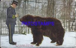 107327 US NEW YORK ZOOLOGICAL PARK ALASKAN BROWN BEAR BREAK POSTAL POSTCARD - Vereinigte Staaten