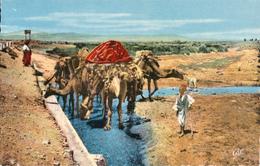 TUNISIE / Tunesien - Kamele An Der Trenke - Tunesien
