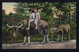 ASIE - PHILIPPINE - MANILA - Carabao And Calf - Attelage De Boeufs - Philippines