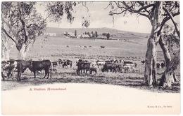 Australia. A Station Homestead, NSW. Undivided Back - Australia