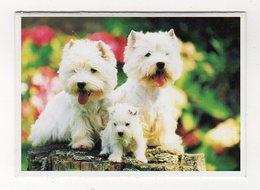 Jan19   84043     Petit Calendrier    3 PETITS CHIENS - Calendriers
