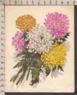 93511GF/ FLEURS, Illustrateur V. HANCKE, Carte Pop Up, Chrysantèmes - Flowers