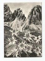 "1980, Fiori - ""Stelle Alpine"" - Fiori"