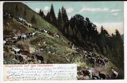 SUISSE - Ziegenherde Auf Den Hochalpen - Chèvres - 1914 (Z200) - Suisse