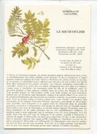 Le Micocoulier Astrologie Gauloise (arbre Conte Fable Légende) Illustration Muséum Histoire Naturelle Paris (cp Vierge) - Arbres