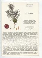 Le Cyprès : Astrologie Gauloise (arbre Conte Fable Légende) Illustration Muséum Histoire Naturelle Paris (cp Vierge) - Arbres