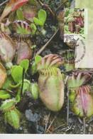 Australia 2013 Carnivorous Plant, Cephalotus Follicularis, Maximum Card - Maximum Cards