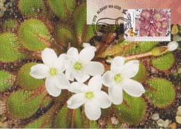 Australia 2013 Carnivorous Plant, Drasera Lowriei, Maximum Card - Maximum Cards