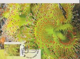 Australia 2013 Carnivorous Plant, Drosera Rupicola, Maximum Card - Cartes-Maximum (CM)