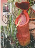 Australia 2013 Carnivorous Plant, Nepenthes Rowanae, Maximum Card - Cartes-Maximum (CM)