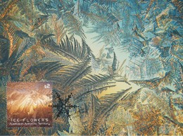 Australian Antarctic Territory 2016 Ice Flowers $ 2, Maximum Card - Maximum Cards
