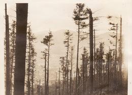 Photo 1916 Vallée De MUNSTER - Une Vue (A205, Ww1, Wk 1) - Munster