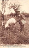Périgord. Métiers Et Divers    24        Chercheur De Truffes Cochon..Le Départ     (voir Scan) - Non Classés