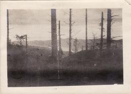 Photo Novembre 1916 Vallée De MUNSTER, Kleinkopf - Une Vue (A205, Ww1, Wk 1) - Munster