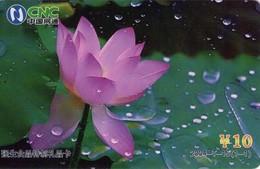 TARJETA TELEFONICA DE CHINA. FLORES - FLOWERS. 2004-T-15(1-1). (371) - Flores