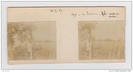 PHOTO STÉRÉOSCOPIQUE AMATEUR SAVIGNY SUR CLAIRIS YONNE 14 JUILLET 1923 LA MORTOISERIE KIKI MONTE AU ROSIER (CHAT) - Photos Stéréoscopiques