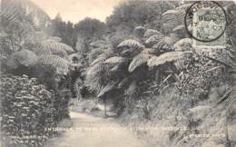 Nouvelle Zélande / Belle Oblitération - Nouvelle-Zélande